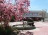 Frühling auf dem Schulhof